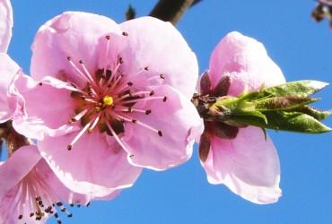 Květná neděle