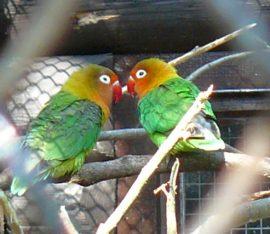 Ptáci v kleci